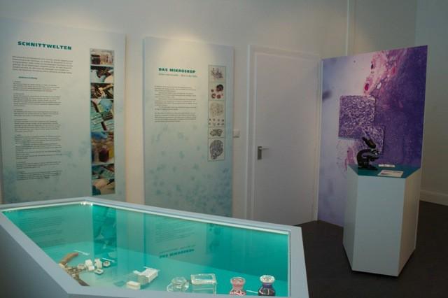 Temporäre Ausstellung Lymphomforschung (2)